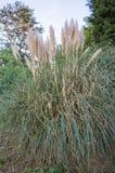 Wielki Paprociowy krzak w parku w środkowym Anglia Zdjęcie Stock