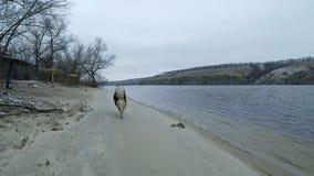 Wielki piękny pies traken łuskowaty malamute biega wzdłuż banka zimna rzeka w zimie w zwolnionym tempie zdjęcie wideo