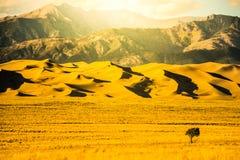 Wielki piasek diun Gorący Złoty zmierzch Zdjęcie Royalty Free