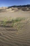 Wielki piasek diun park narodowy w Południowym Kolorado Zdjęcie Royalty Free