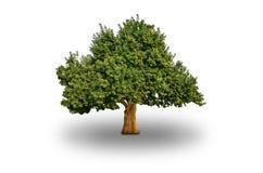 wielki pojedynczy drzewo Fotografia Royalty Free