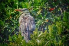wielki ptak Zdjęcie Stock