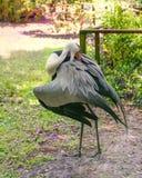 Wielki ptasi Wattled żuraw Gruidae rodzina pionowo Fotografia Royalty Free