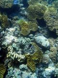 wielki rafowy bariery pod wodą Zdjęcia Stock