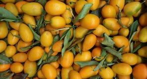 Wielki rozsypisko kumquats, cytrusa japonica jest naukowym imieniem, Karmowym tłem i teksturą, fotografia royalty free