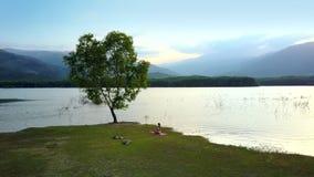 Wielki samotny drzewo na jeziornym banku i kobiecie na trawie zbiory