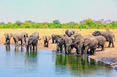 Wielki stado Afrykańscy słonie przy waterhole bierze napój w przebraniu dnia z naturalnym krzaka niebieskim niebem i tłem zdjęcie royalty free