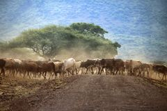 Wielki stado krowy Obrazy Royalty Free