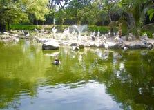 Wielki staw z pięknymi ptakami i drzewem Obrazy Royalty Free