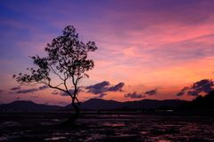 wielki sylwetki drzewo Fotografia Stock