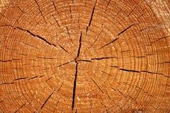 wielki tekstury drewno drzew Zdjęcia Royalty Free