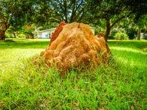 Wielki termitu kopiec w tle mieszkaniowa mieszanka Liberia, Monrowia, afryka zachodnia Obraz Royalty Free