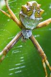 Wielki tropikalny pająk obrazy stock
