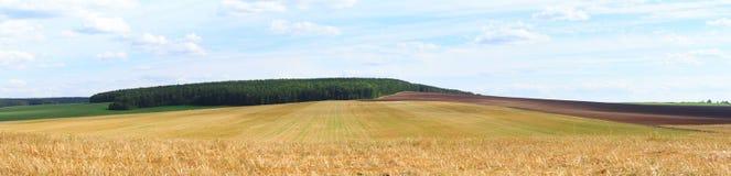 Wielki widok na pszenicznym polu Zdjęcie Royalty Free