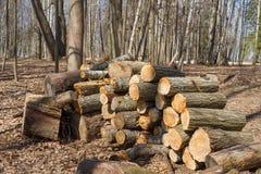 Wielki woodpile łupka obraz stock