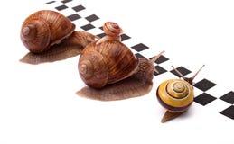 wielki wyścig Zdjęcia Stock