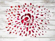 Wielki wybucha czerwony bauble z Rudolph czerwony ostrożnie wprowadzać renifer o obraz stock