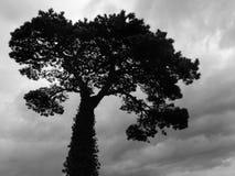 wielkie drzewo Zdjęcia Royalty Free