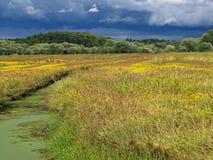 wielkie łąki Zdjęcie Stock