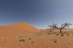 wielkie miasto pustyni galerii krajobrazy martwych więcej moich poprzednich panorama sunset różnice drzewna pracy Obraz Royalty Free