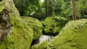 Wielkie skały zakrywać w jaskrawym - zielony mech i liany przy słoniem Zawalamy się świątynię zbiory