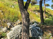 Wielkie skały, brukowi kamienie obok sosny na zielonej trawie blisko drogi Obrazy Stock