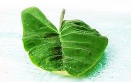 wielkie zielone liści, Obrazy Royalty Free