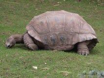 wielkiego żółwia zdjęcie royalty free