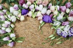 Wielo- barwiona kwiat rama Obraz Stock