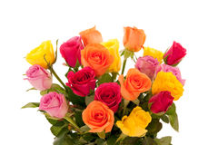 Wielo- barwione róże Fotografia Royalty Free