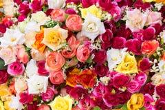 Wielo- barwione sztuczne róże Obrazy Royalty Free