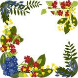 Wielo- barwioni florets ilustracji