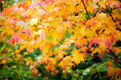 Wielo- colour liść obraz stock