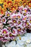 Wielo- kolor chryzantemy kwiatu bukiet dla tła Zdjęcia Stock