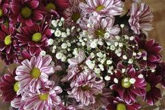 Wielo- koloru bukiet z taki kwiatem jak dalii i chryzantemy Obraz Royalty Free