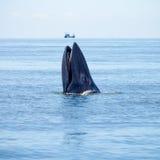 wieloryb Zdjęcie Royalty Free