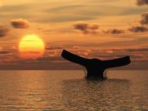 wieloryb Obrazy Stock