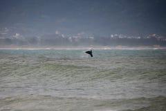 Wieloryb na Brazylijskim wybrzeżu Obraz Stock