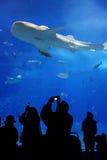 wieloryb rekina Zdjęcia Royalty Free