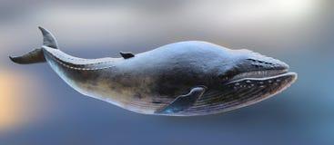 Wieloryba model obraz royalty free