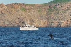 Wielorybi dopatrywanie, channel islands park narodowy Zdjęcia Royalty Free