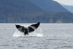 Wielorybi dopatrywanie, humpback wieloryby w Alaska fotografia stock