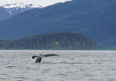 Wielorybi dopatrywanie, humpback wieloryby w Alaska zdjęcia royalty free