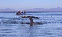 Wielorybi dopatrywanie w Baj zdjęcia royalty free