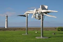 Wielorybi kościec Zdjęcia Stock