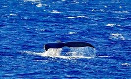 Wielorybi ogon fotografia stock