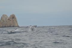 Wielorybi ogon Fotografia Royalty Free