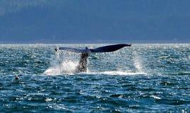 Wielorybi ` s ogon Fotografia Stock