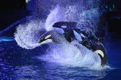 wieloryby Zdjęcia Royalty Free