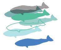Wieloryby, ilustracja cyfrowa, Fotografia Stock
